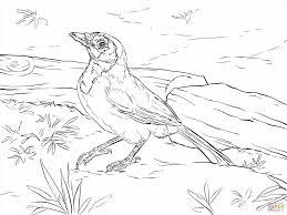 Small Picture Realistic Realistic Bird Coloring Pages Bird Coloring Pages Also