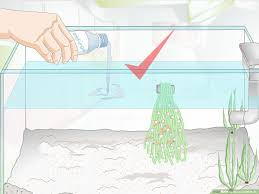 How To Raise Goldfish Fry 13 Steps With Pictures Wikihow
