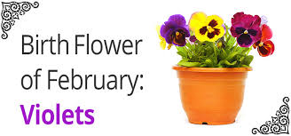 birth flower of february