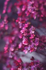 flower wallpaper hd for mobile. Interesting For Pink Flowers Macro Wallpaper And Flower Wallpaper Hd For Mobile