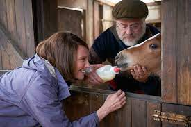 Dream Horse Pictures - Rotten Tomatoes