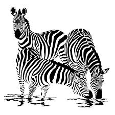 Coloriage Dessiner Zebre Imprimer Coloriage Z Bre Gratuit Image
