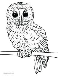 Owl Color Page Owl Coloring Pages Cute Owl Coloring Page Owl Color