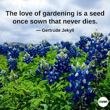 inspirational gardening quotes mother nature network the love of gardening is a seed once sown that never dies gertrude jekyll