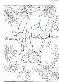 Bambi Kleurplaten Kleurennet