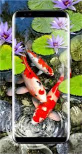 3d Koi Fish Wallpaper Hd 3d Fish Live ...