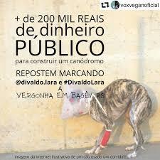 Galgo Livre BR - Photos   Facebook