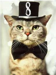Image result for number 8 is a cat