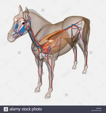 Top 11 Trends In Parts Of The Horse Hoof Diagram Information