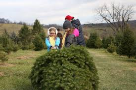 Snickers Gap Christmas Tree farm is a family owned choose-and-cut Christmas  tree