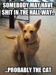 Guilty Dog - Imgur via Relatably.com