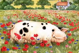 Farm Animal Kitchen Decor Print Kitchen Decor Farm Animal Sow Pig Red Poppy Field