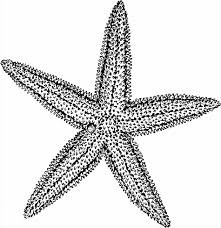 Small Picture Starfish Starfish Coloring Pages Coloring Page Clipart Panda Free