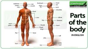Human Body Parts Chart In English Parts Of The Body In English Video Woodward English