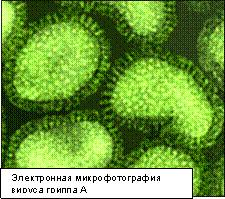 Инфекционные заболевания людей ru Заболевание гриппом сопровождает высокая смертность особенно у маленьких детей и пожилых людей Эпидемии гриппа случаются каждый