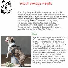 Pitbull Size Chart Weight Pitbull The Best Pitbull Average Weight Karim Remix