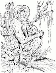 Top monkeys coloring pages for kids: 33 Monkey Coloring Pages For Adults Free Printable Coloring Pages