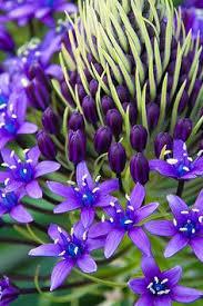 фактура, цвета.: лучшие изображения (279) | Цветы, Растения и ...