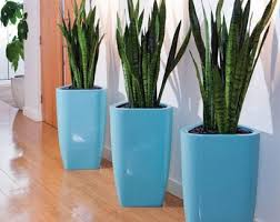 office indoor plants. indoor plants, office, interior plants office a