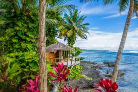 trip ideas tree outdoor habitat tropics plant botany caribbean vacation palm arecales resort jungle beach flower