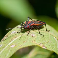 Earthbox Insect Indentifier