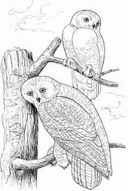 Small Picture Owl coloring pages Owls are a group of birds that belong to the