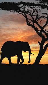Iphone Baby Elephant Background