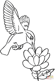 Small Picture Hummingbird drinks nectar coloring page Free Printable Coloring