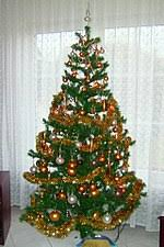 Image result for paradise tree as christmas tree