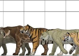 Big Felines Size Chart Greeting Card