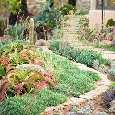 Small Picture Desert Landscape Ideas for New Gardeners