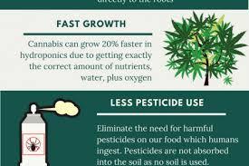 ly Infographics Medical Visual Marijuana