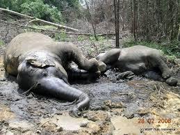 Image result for deforestation animals dying