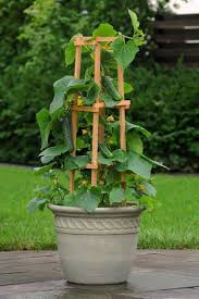 container garden vegetables.  Container Support Climbing Vegetables And Vines Direct Them Upward With The Help  Of A Trellis Or Cage By Any Other Way Such Plants Use Vertical Space  With Container Garden Vegetables