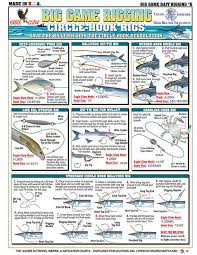 Bait Rigging And Knot Tying Techniques For Inshore