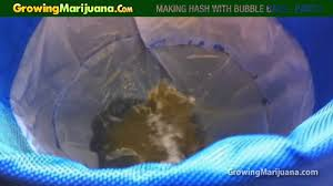 making hash with bubble bags hash making part 2 of 2