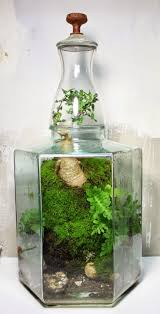 709 best Terrariums and Aeriums images on Pinterest | Centerpieces,  Creative and Gardening