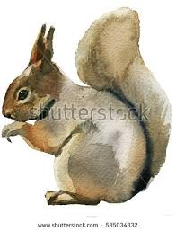 Small Picture Squirrel Drawing Stock Images Royalty Free Images Vectors
