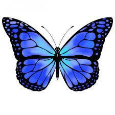 These images will give you an idea of the kind of image(s) to place in your articles and. Blue Monarch Butterfly Blue Butterfly By Vicksterxp How Bout A Blue Blue Butterfly Tattoo Monarch Butterfly Tattoo Butterfly Drawing