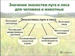 Презентация на тему Экосистемы луга леса и поля Автор Усачева  27 Значение экосистем