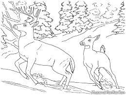 Gambar rusa gambar rusa