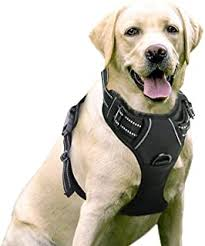 Best Front Leg Amputee Dog Harness Of 2019 Top Rated