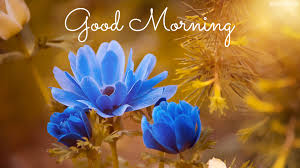 collection of 5 beautiful good morning wishes flowers