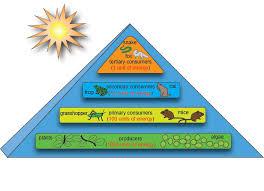 Biology Ecosystem Energy Flow Shmoop Biology