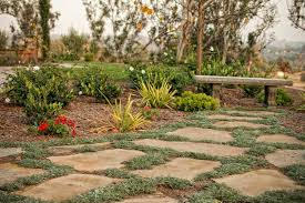 how to grow moss between pavers plant