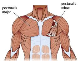 The interpretation of a chest film requires the understanding of basic principles. Tight Chest Muscles Why Your Upper Back Is The Key To Their Release Laguna Orthopedic Rehabilitation
