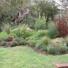 Small Picture Best 20 Native plants ideas on Pinterest Xeriscape california