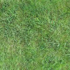 Tall Grass Seamless Texture Free Grass Textures Tall Seamless