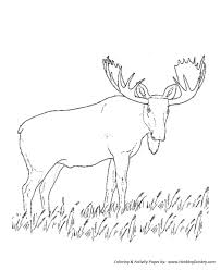 Small Picture Wild Animal Coloring Pages Grazing moose Coloring Page and Kids