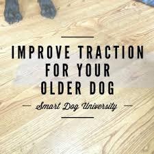 dog traction dog falls dog training dog obence frederick er traction on hardwood floors